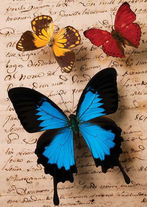 Letter Greeting Card featuring the photograph Three Butterflies by Garry Gay