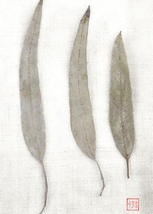 Carol Leigh Greeting Card featuring the photograph Three Eucalyptus Leaves by Carol Leigh
