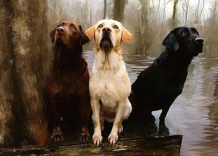 Lab Greeting Card featuring the painting Three Labs by Robert Smith