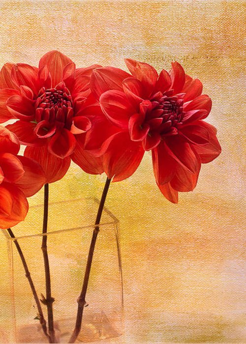 Dahlias Greeting Card featuring the photograph Three Orange Dahlias by Rebecca Cozart