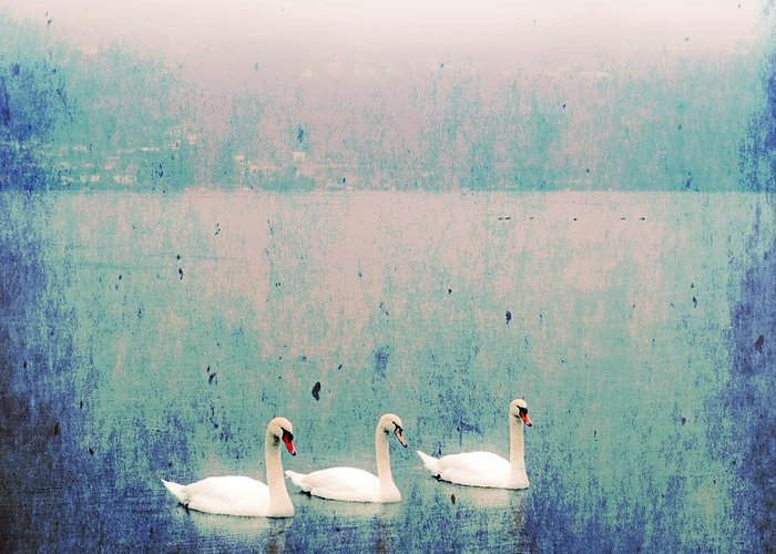 Swan Greeting Card featuring the photograph Three Swans by Joana Kruse