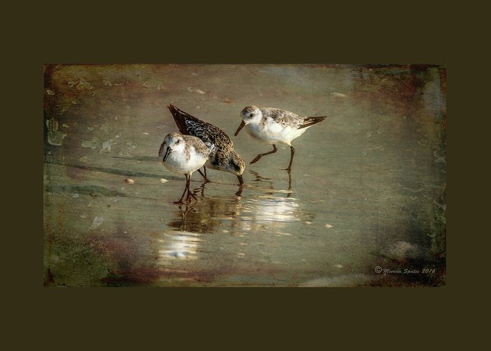Birds Greeting Card featuring the photograph Three Together by Marvin Spates