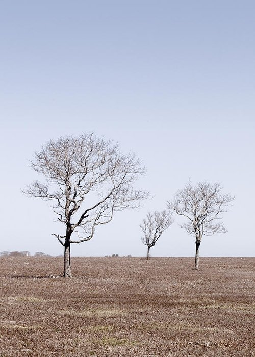 Trees Greeting Card featuring the photograph Three Trees - Nantucket by Henry Krauzyk