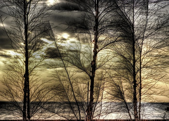 Hdr Greeting Card featuring the photograph Three Trees by E R Smith