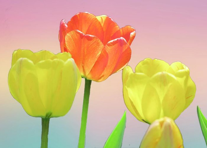Flowers & Plants Greeting Card featuring the digital art Three Tulips. by Rusty R Smith