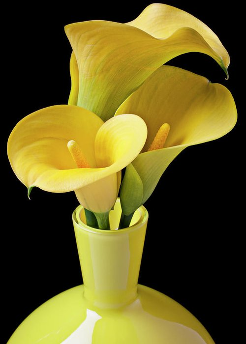 Calla Lily Greeting Card featuring the photograph Three Yellow Calla Lilies by Garry Gay