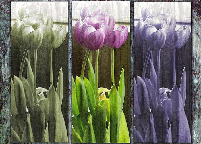 Tulips Greeting Card featuring the photograph Threelips by Tom Romeo