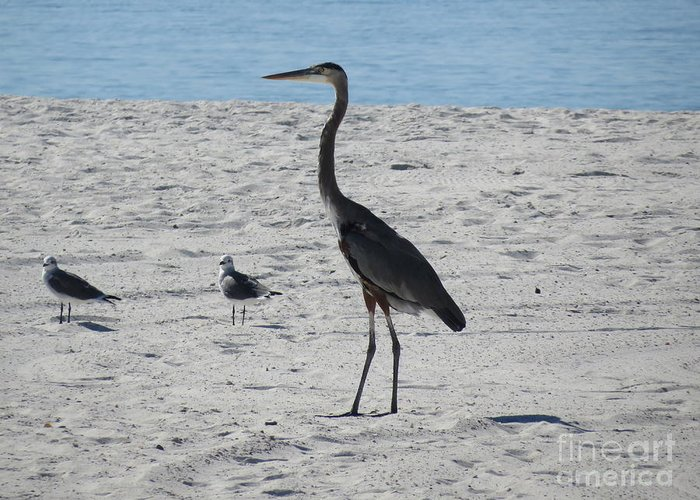 Great Blue Heron Greeting Card featuring the photograph Three's A Crowd by Charles Green