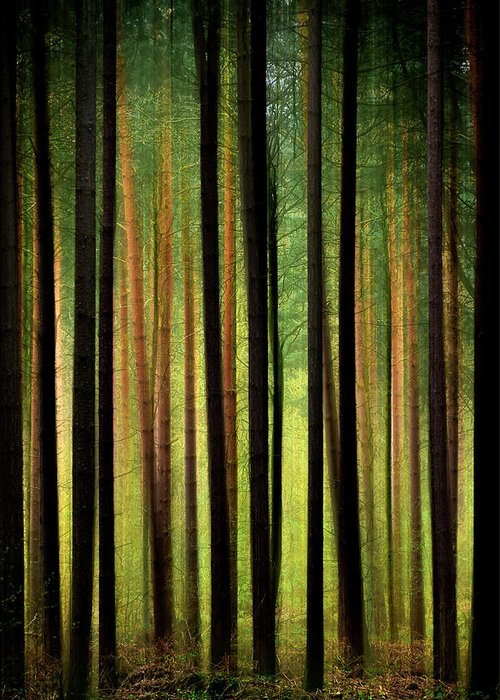 Forest Greeting Card featuring the photograph Through The Woods by Svetlana Sewell