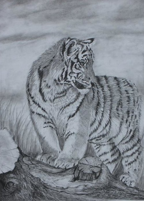 Tiger Greeting Card featuring the drawing Tiger Cub 1 by Sheila Banga