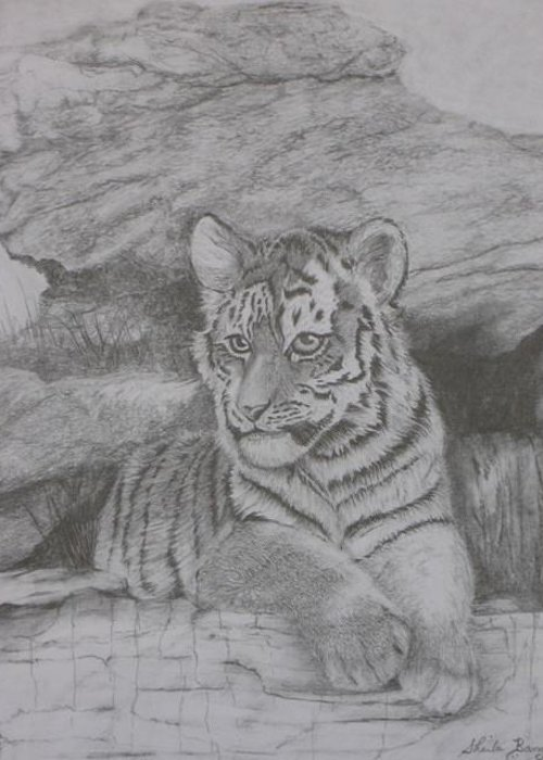 Tiger Greeting Card featuring the drawing Tiger Cub 2 by Sheila Banga