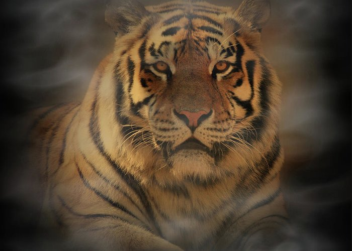 Tiger Greeting Card featuring the photograph Tiger by Sandy Keeton