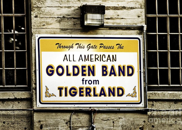 Tigers Greeting Card featuring the photograph Tigerland Band by Scott Pellegrin