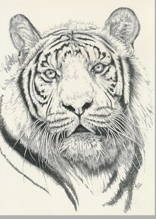 Tiger Greeting Card featuring the drawing Tigerlily by Barbara Keith