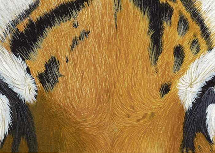 Tigers Eye Greeting Card featuring the painting Tigers Eye by Laurie Bath