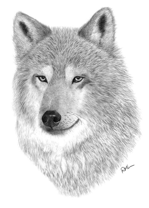 Wolf Drawing Greeting Card featuring the drawing Timber Wolf by Rosanna Maria