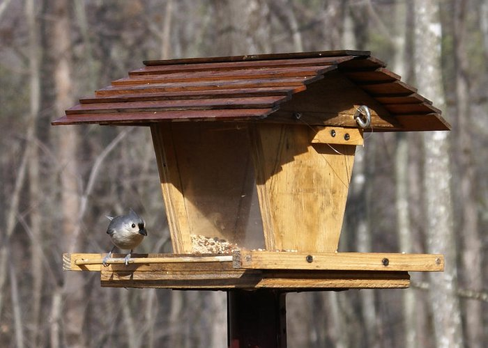 Tufted Greeting Card featuring the photograph Titmouse Feeding by Douglas Barnett