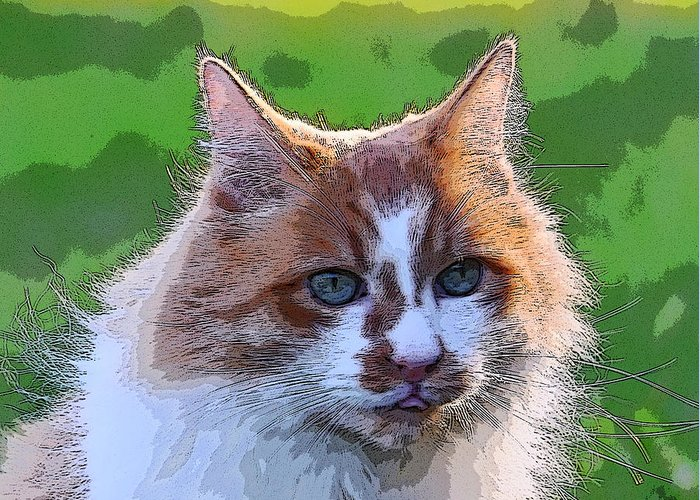 Cat Greeting Card featuring the photograph TJ by Alan C Wade