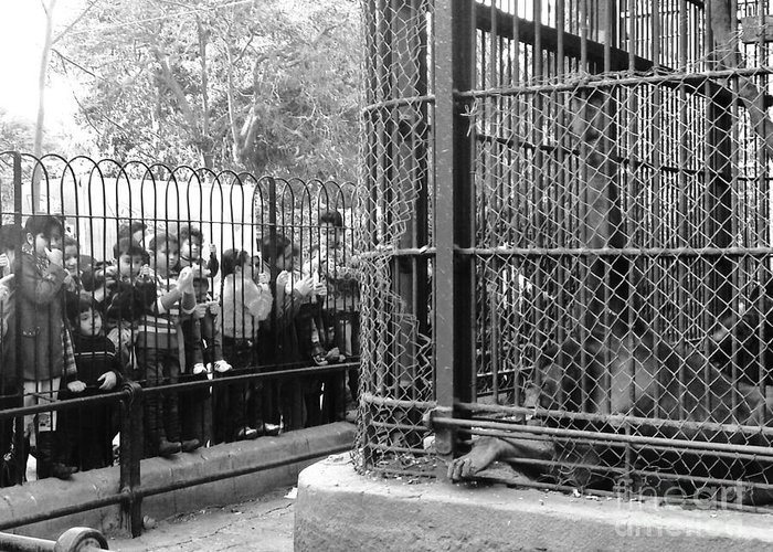 Zoo Monkey Beg For Food Cage Kids Black And White Greeting Card featuring the photograph to Beg by Mina Milad