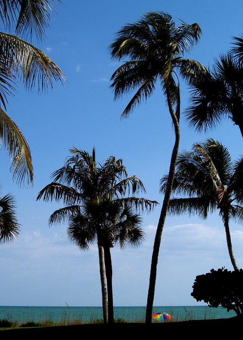 Palm Tree Greeting Card featuring the photograph To The Sea by Richard Mansfield