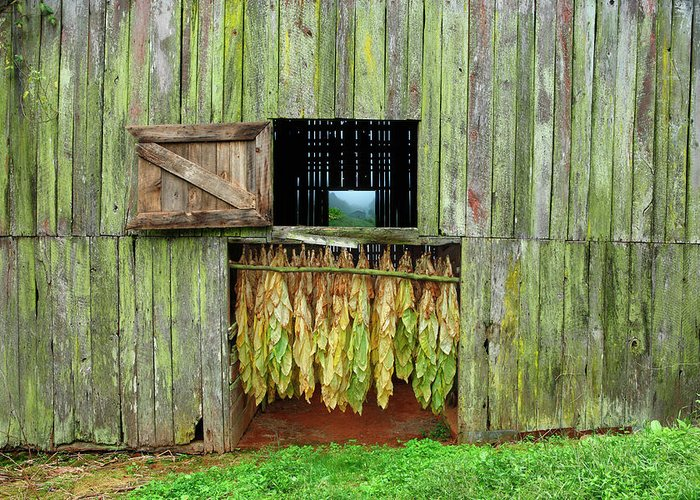 Tobacco Barn Greeting Card featuring the photograph Tobacco Barn by Ron Morecraft