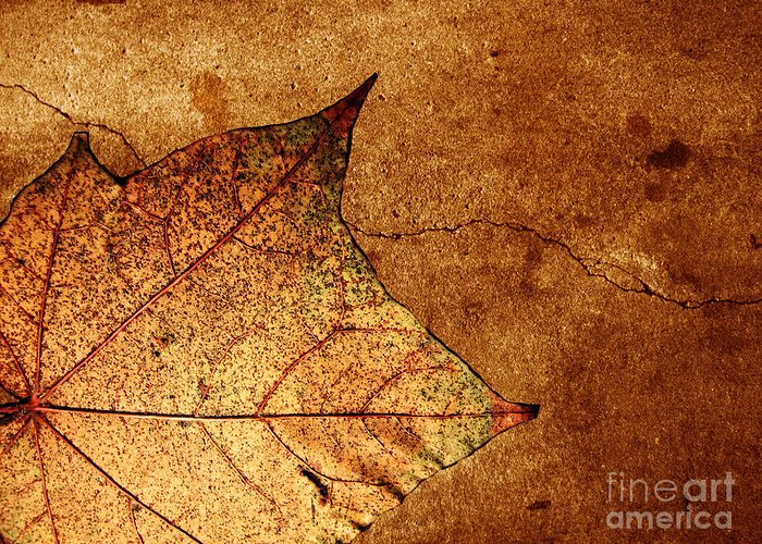 Autumn Greeting Card featuring the photograph Today Everything Changes by Dana DiPasquale
