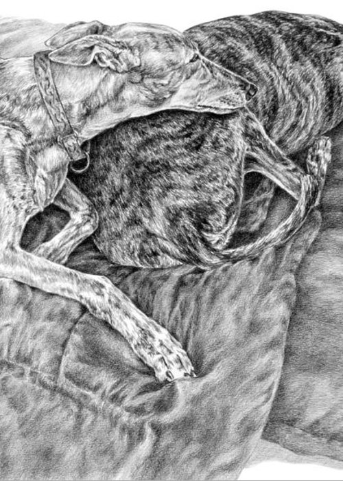 Greyhound Greeting Card featuring the drawing Togetherness - Greyhound Dog Art Print by Kelli Swan
