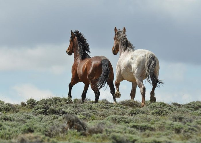 Wild Horses Greeting Card featuring the photograph Too Beautiful by Frank Madia