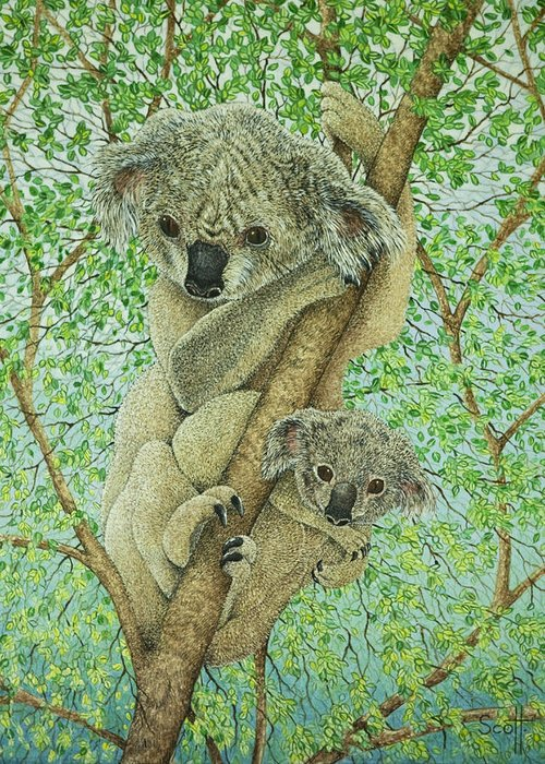 Koala Greeting Cards