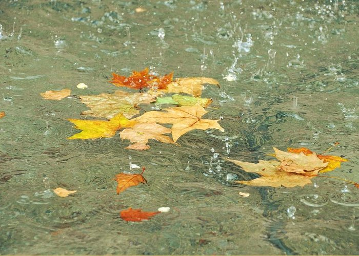Fallen Greeting Card featuring the photograph Tossed Leaves by JAMART Photography