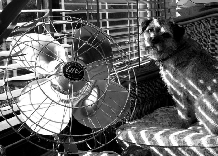 Electric Fan Greeting Card featuring the photograph Toto Checks In by Charles Stuart