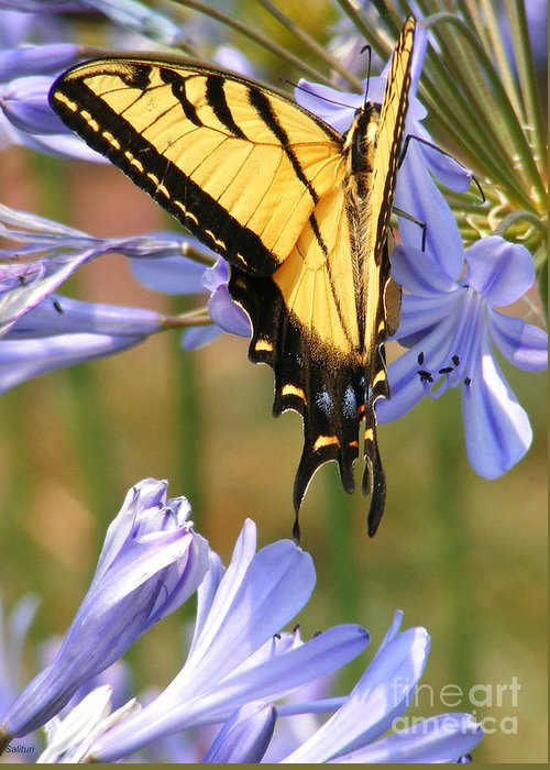 Butterfly Greeting Card featuring the photograph Touching Lilly by Gail Salitui