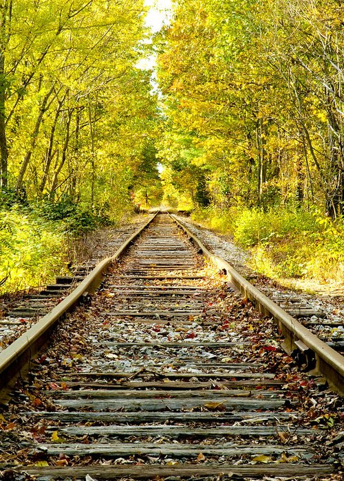 Foliage Greeting Card featuring the photograph Track To Nowhere by Greg Fortier
