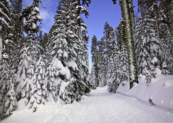 Snow Greeting Card featuring the photograph Trail Through Trees by Garry Gay