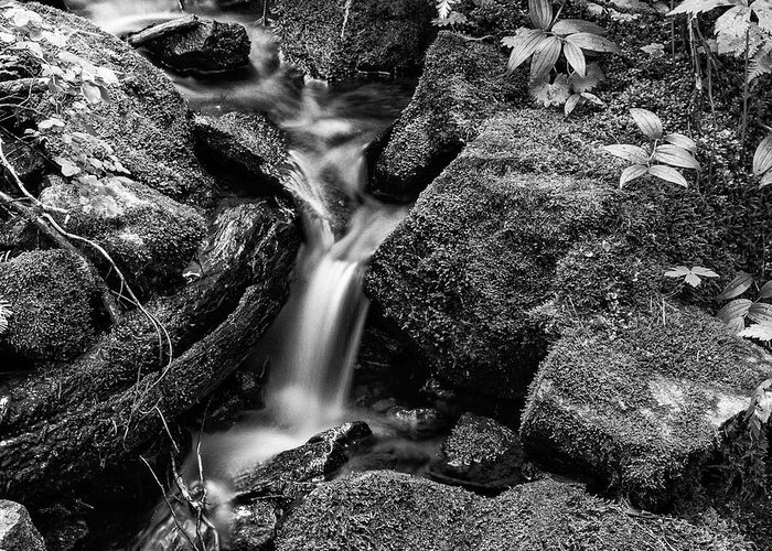 Cascade Greeting Card featuring the photograph Tranquil Cascade - Bw by Stephen Stookey