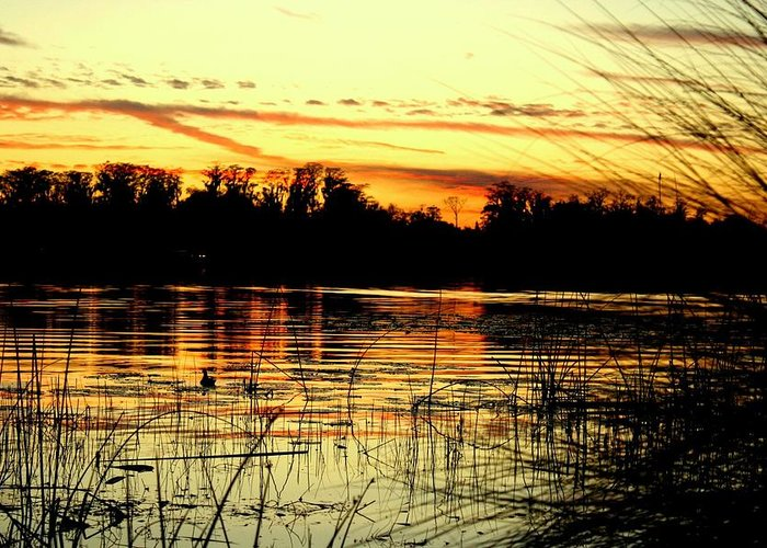 Lake Greeting Card featuring the photograph Tranquil Thoughts by Maria Young