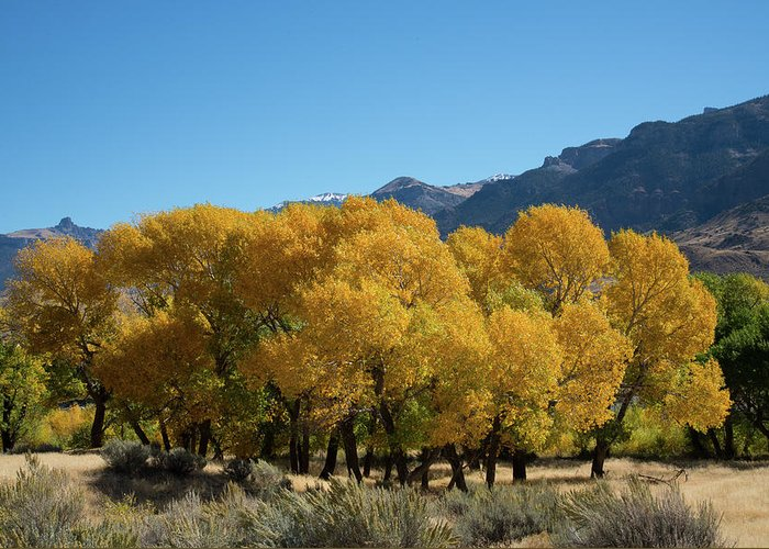 Cody Greeting Card featuring the photograph Tranquility in Golds and Yellows by Frank Madia