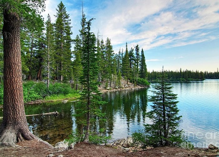Tree Greeting Card featuring the photograph Tranquility - Twin Lakes In Mammoth Lakes California by Jamie Pham
