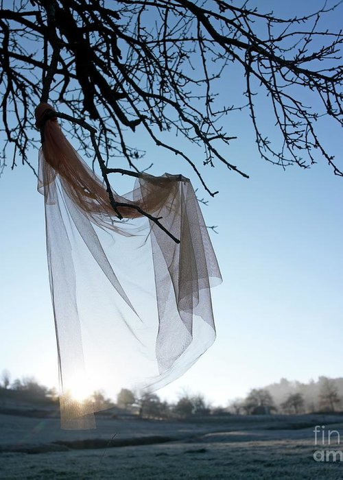 Bare Tree Greeting Card featuring the photograph Transparent Fabric by Bernard Jaubert