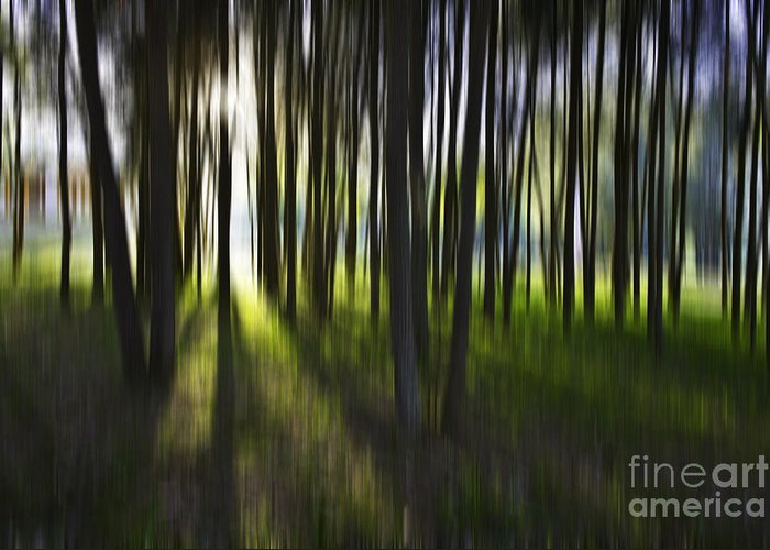 Trees Abstract Tree Lines Forest Wood Greeting Card featuring the photograph Tree Abstract by Avalon Fine Art Photography
