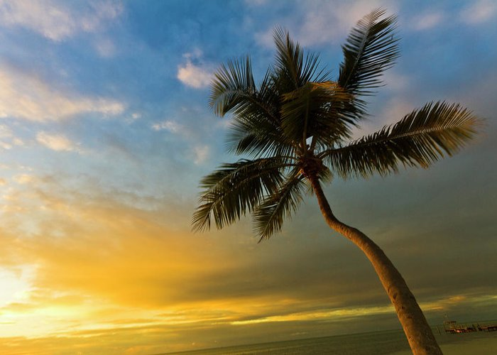 Florida Key West Greeting Card featuring the photograph Tree Against Sky by Jerril Mathew