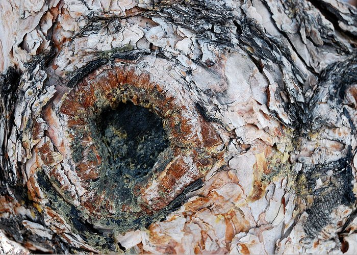 Tree Bark Greeting Card featuring the photograph Tree Bark by Apurva Madia