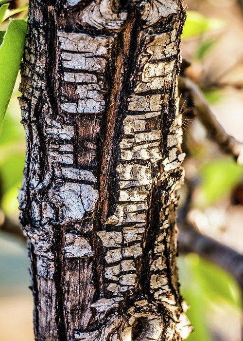 Tree Bark Greeting Card featuring the photograph Tree Bark by Subhadra Burugula