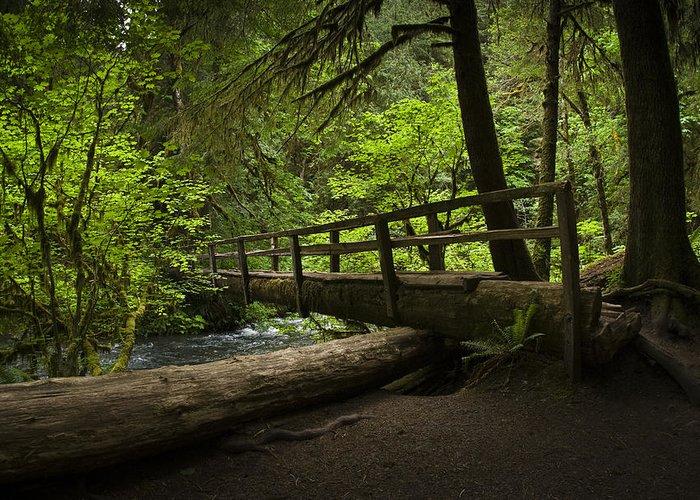 Chad Davis Greeting Card featuring the photograph Tree Bridge by Chad Davis