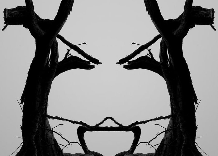 Tree Greeting Card featuring the photograph Tree Face I Bw Sq by David Gordon