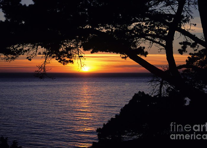 Ali O Neal Greeting Card featuring the photograph Tree Framing Seascape Sunset by Ali ONeal - Printscapes