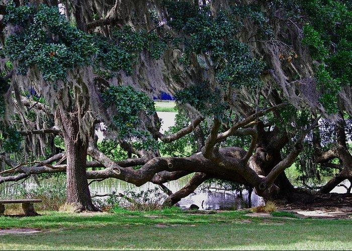 Charleston Greeting Card featuring the photograph Tree Horizontal by Steavon Horne
