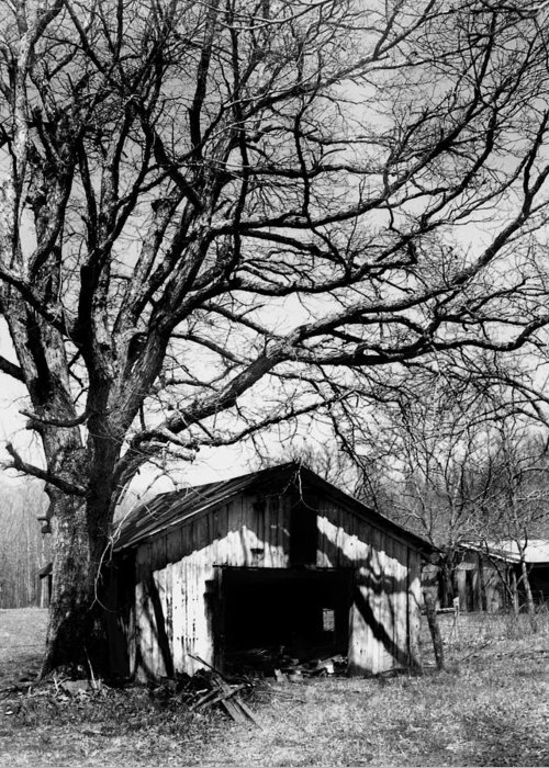Ansel Adams Greeting Card featuring the photograph Tree-hut by Curtis J Neeley Jr