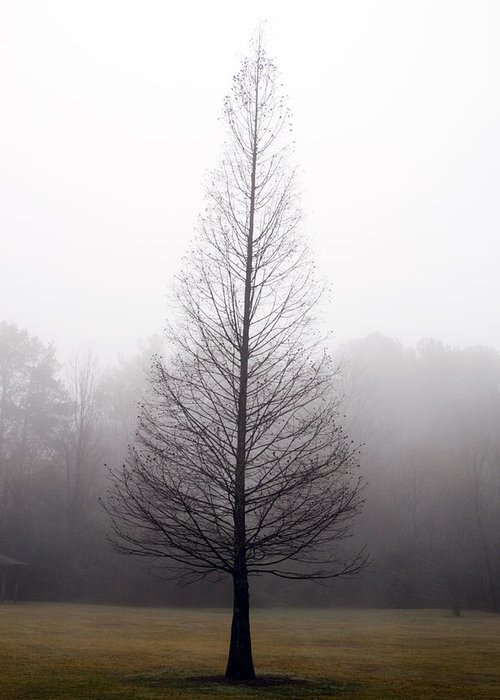 Scenic Greeting Card featuring the photograph Tree In Fog by Ayesha Lakes