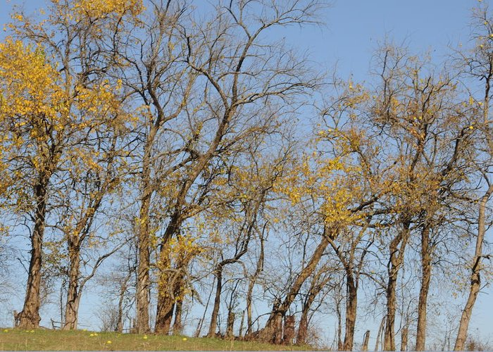 Tree Greeting Card featuring the photograph Tree Line by Jon Benson